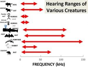 Non tutte le specie percepiscono lo stesso range di frequenze sonore