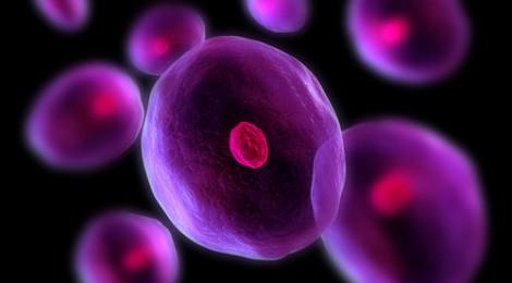 Dalle staminali una speranza per la rigenerazione dei tessuti cardiaci danneggiati