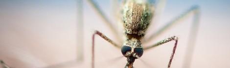 Malaria: un passo avanti verso il vaccino