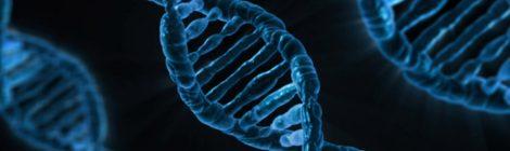 Staminali: attenzione ai mitocondri