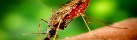 Malaria, scoperti i geni chiave della resistenza ai farmaci