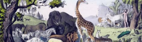 Qual è il nesso tra pandemie e azione dell'uomo sulla natura?