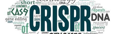 CRISPR e le dipendenze del cancro: verso una mappatura sempre più completa