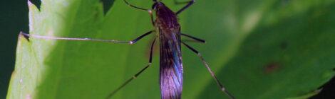 Tracciare zanzare con l'app MosquitoAlert